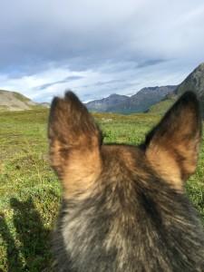 Ears-eye view