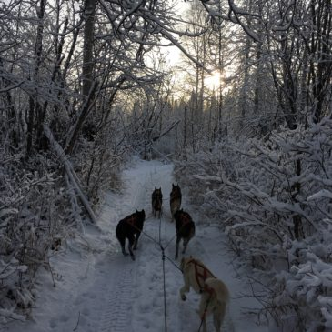 Adventures in Mushing