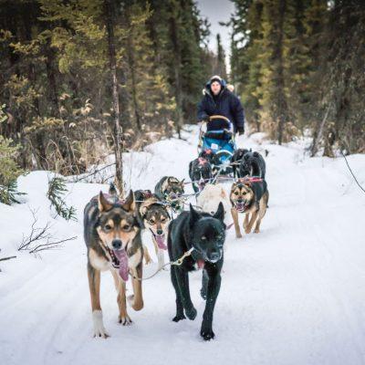 Support ATAO's 2021 Iditarod
