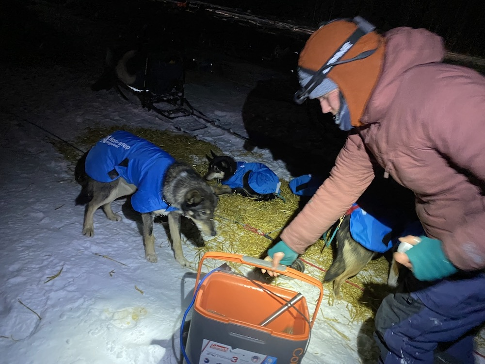 A person wearing many warm layers holds a cooler in front of a sled dog, who sniffs it curiously