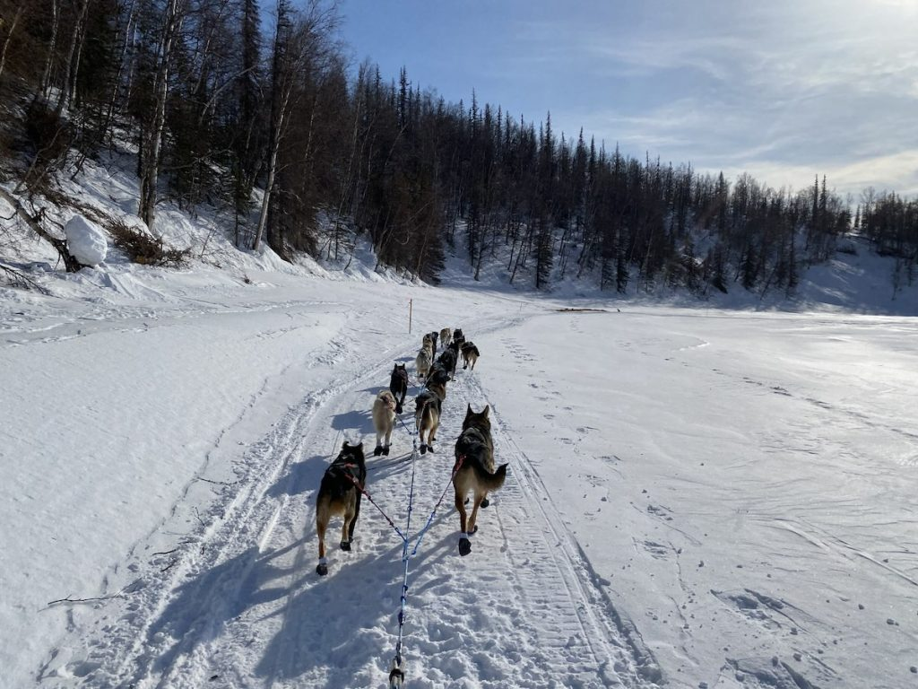 A team of sled dogs travels on a snowy trail alongside a hill of trees