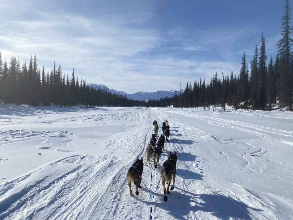 A team of sled dogs travels down a snowy trail towards mountains and trees on a sunny day