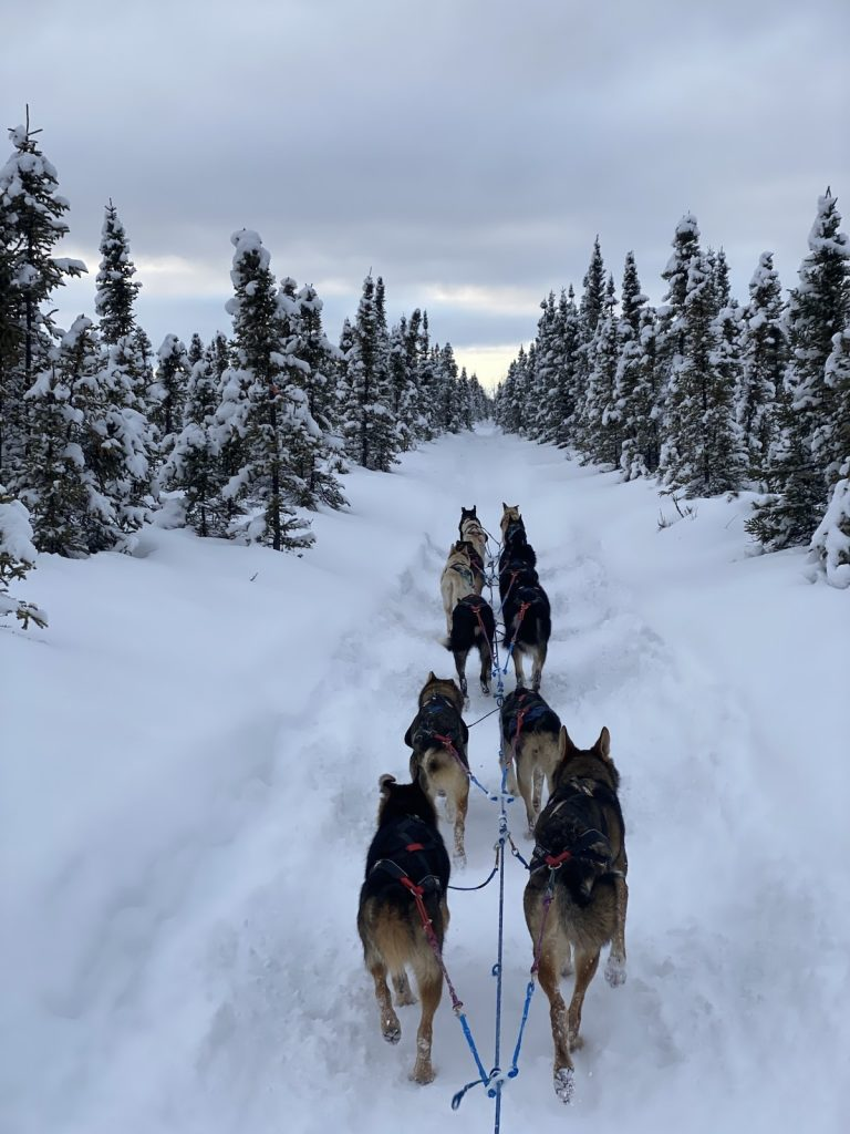 A sled dog team mushes through the trees on a very snowy trail