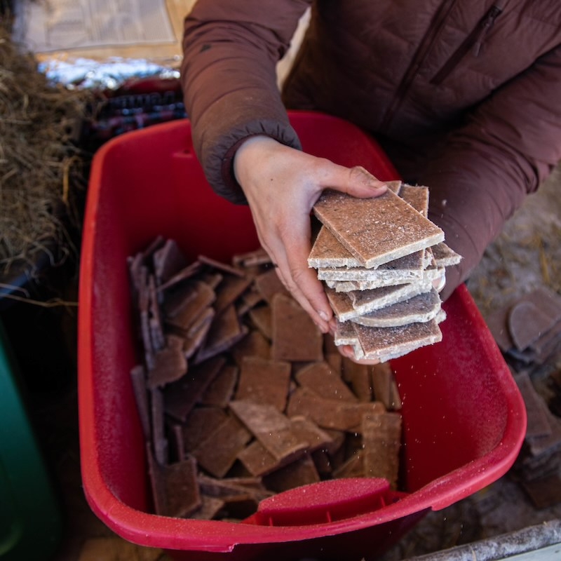 Sam the handler sets a square block of frozen meat into a tub full of other blocks